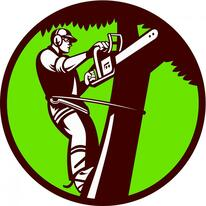 Kansas City tree care services