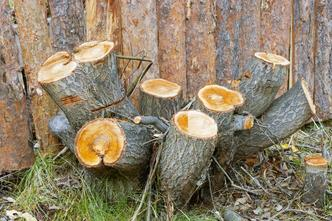 Kansas City stump removal services