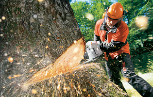 Emergency Tree Service Kansas City Missouri