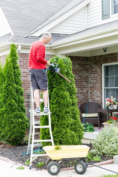 Kansas City tree trimming services